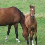 Carmen foal with Saga